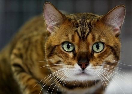 Nuôi mèo có thể nguy hiểm đến tính mạng?
