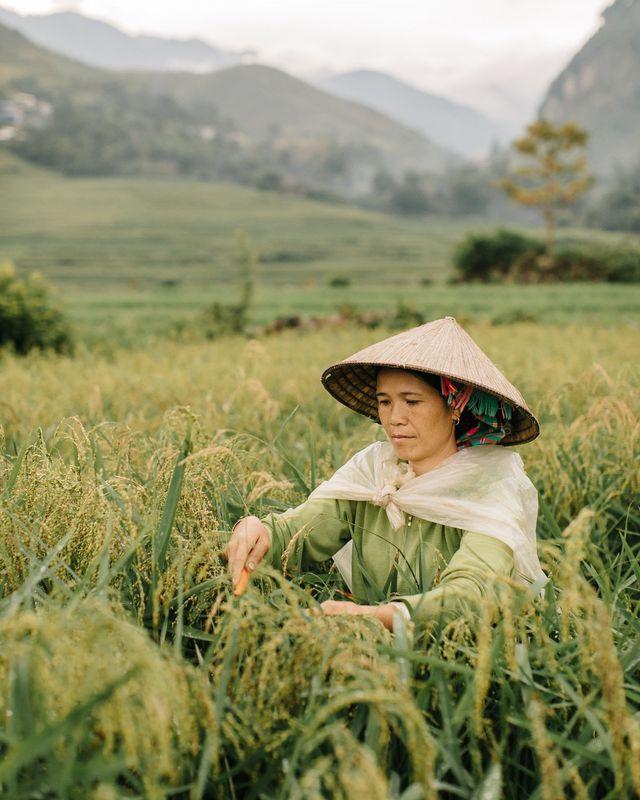 Việt Nam tươi đẹp trong những khuôn hình xanh mướt mắt