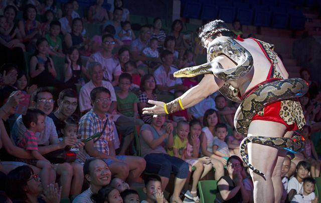 Cấm sử dụng động vật hoang dã trong biểu diễn xiếc: Khán giả hụt hẫng, phản ứng?