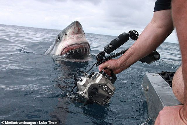 """Những bức ảnh rùng rợn gợi nhắc tới phim kinh dị """"Hàm cá mập"""""""
