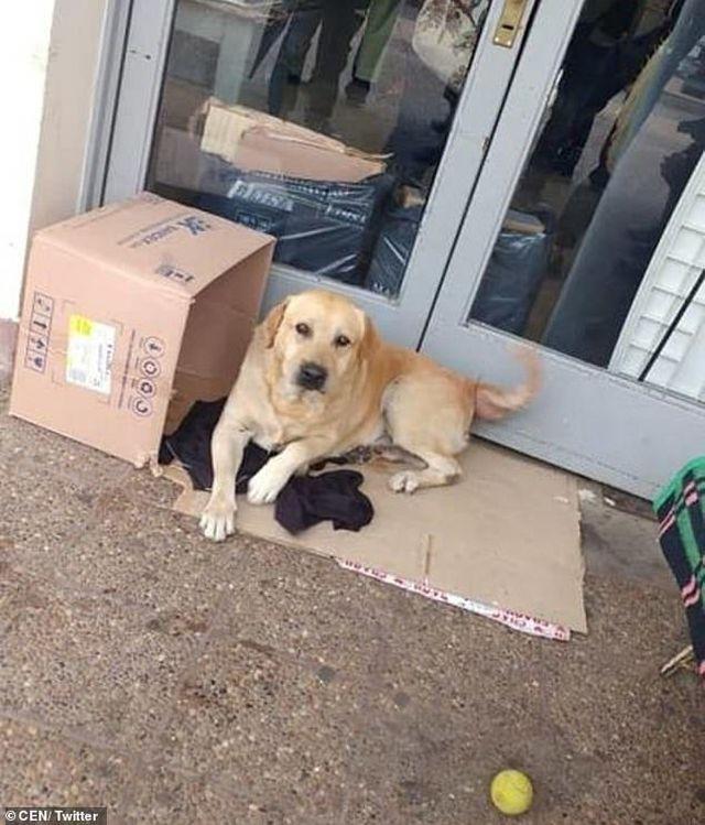 Cảm động chú chó trung thành chờ chủ trước cửa bệnh viện