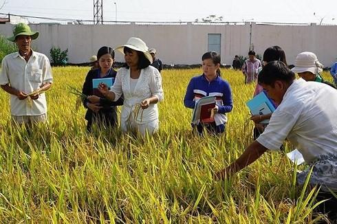 Đến năm 2030, thu nhập bình quân lao động nông nghiệp đạt 90 triệu đồng/người/năm