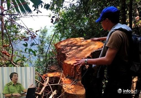 Hàng loạt vụ phá rừng xảy ra, Chi cục trưởng Kiểm lâm vẫn được đề nghị thăng chức