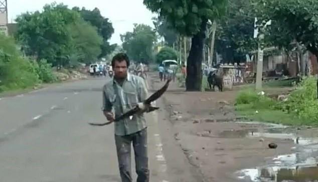 Người đàn ông 3 năm bị đàn quạ đeo bám