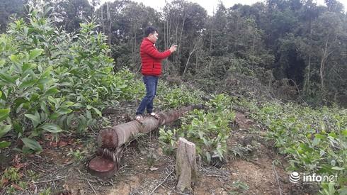 """Quảng Bình: Dân """"tố"""" hàng loạt người nhà lãnh đạo xã phá rừng tự nhiên"""