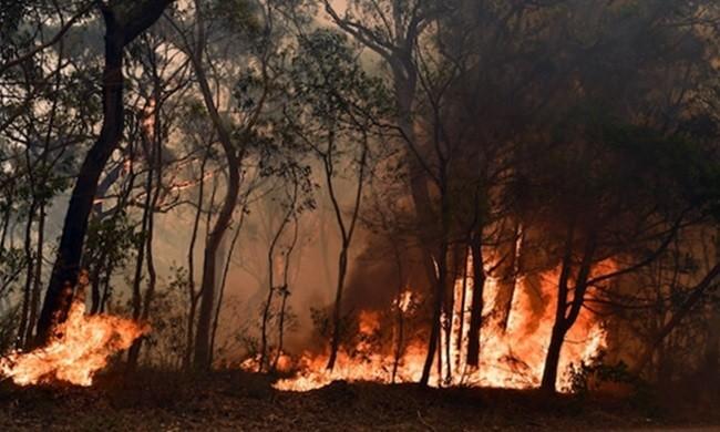 Australia liên tiếp phá kỷ lục nhiệt độ