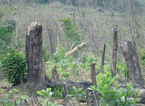 """Quảng Bình: Người nhà cán bộ xã phá rừng, """"càng nương tay họ càng lấn tới"""""""