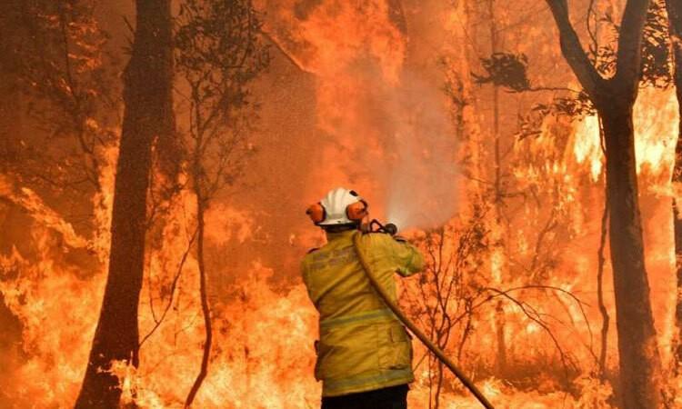 Truy tố 24 người cố ý đốt rừng