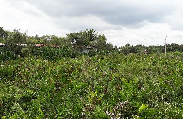 Dự án 156 ha ở TP HCM bị điều tra